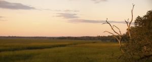 Amelia Island River Marsh Panorama