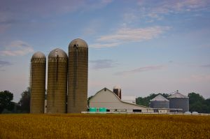 Wheat and Silos, Fort Wayne, IN